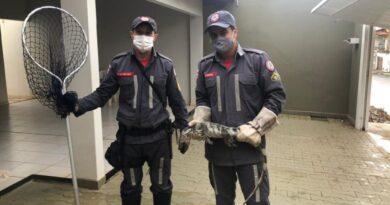 Iguana é resgatada por bombeiros em garagem de casa em Barreiras
