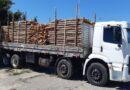 Homem é detido por transportar madeira de origem ilegal na BR-324