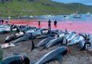 Matança de golfinhos nas Ilhas Faroé gera protestos no mundo