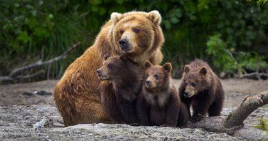 Abaixo de Zero! Acompanhe o ciclo da natureza no Ártico Selvagem